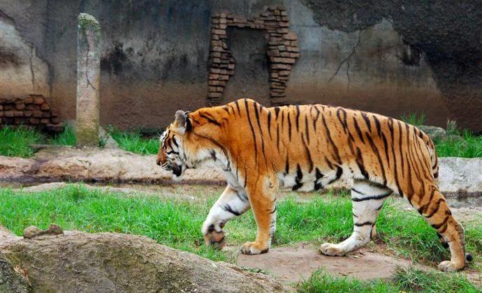 La Aurora Zoo, Guatemala