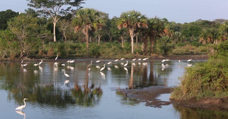 Reserva de la Biosfera La Encrucijada , Chiapas