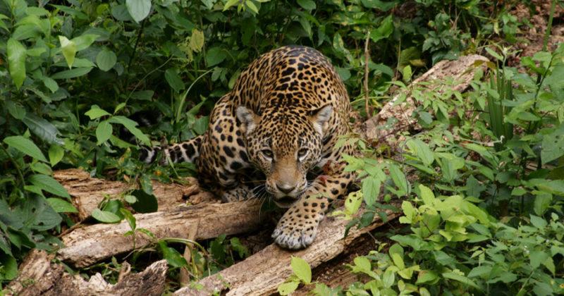 ZooMAT, Chiapas