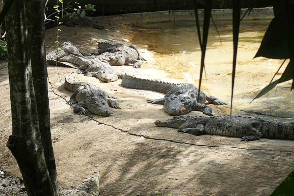 Crococun Zoo, Quintana Roo