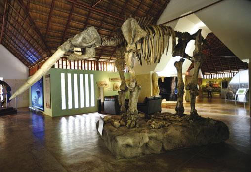 Museo de la Naturaleza y Arqueología de Calakmul