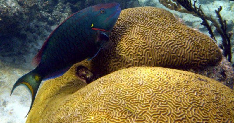 Arrecife Akumal, Quintana Roo