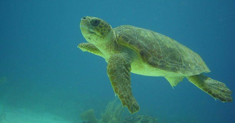 Arrecife Puerto Aventuras, Quintana Roo