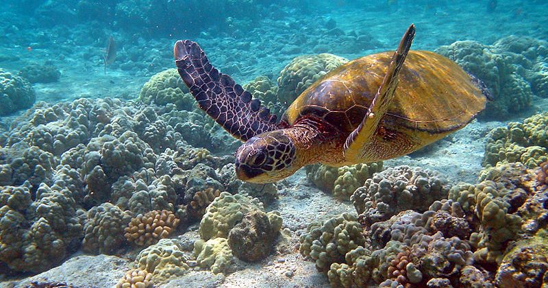 Arrecife Puerto Morelos, Quintana Roo