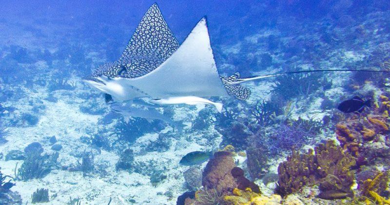 Arrecifes de Cozumel, Quintana Roo