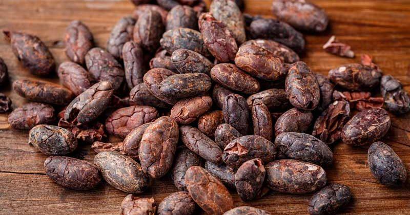 Tabasco, el estado cuna del cacao