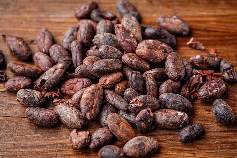 Semillas de cacao, Tabasco, México