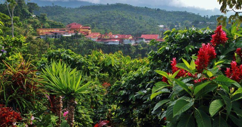 Ruta del café en Chiapas